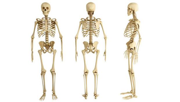 Como curar la Osteoporosis : una perspectiva diferente